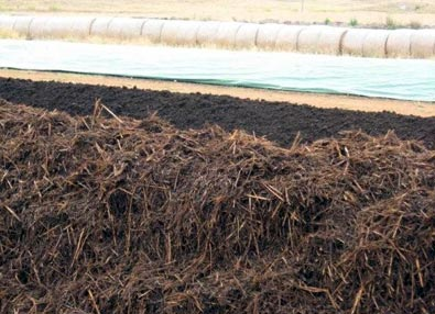 Compost Rows